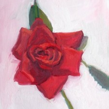 rose-on-white-gautam-rao